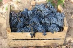 cropped-vendimia-cajon-uvas-1